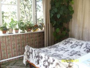 Фото Квартиры, Однокомнатные квартиры Однокомнатная квартира с террасой. №30