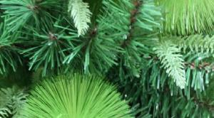 Фото Зеленые ёлки Ёлка зелёная 120 см три вида листьев