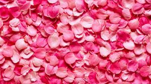 Фото Фотопечать, Фотопечать Цветы Цветы 1