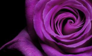 Фото Фотопечать, Фотопечать Цветы Цветы 2