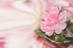 Фото Фотопечать, Фотопечать Цветы Цветы 3