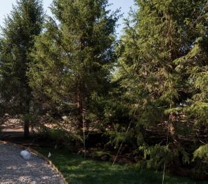Фото  Обслуживание и уход за территориями и зелёными насаждениями