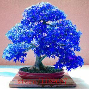 Фото Экзотические растения Японская мини сакура