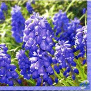Фото Салфетки для декупажа, Цветы Салфетка Цветы Вероники СД-075