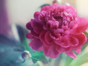 Фото Духи экстра. Дилис Косметик. Духи цветочные
