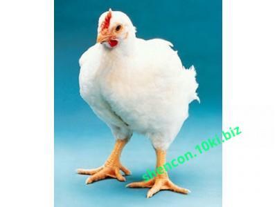 Фото Комбикорма, Комбикорма для птицы Комбикорм откорм бройлеров 12-28 день (СП 21%)