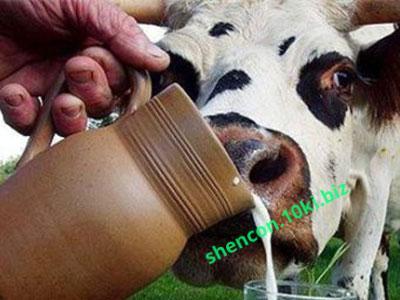 Фото Заменители цельного молока ЗЦМ