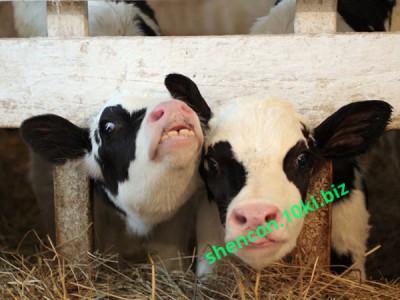Фото Премиксы, Премиксы для коров Премикс