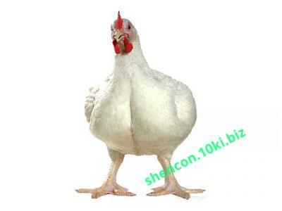 Фото Премиксы, Премиксы для птицы Премикс