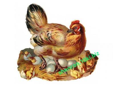 Фото БВМД, БВМД для птицы БМВД