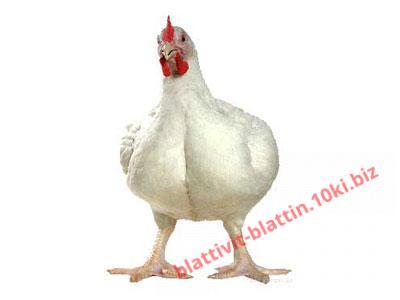 Фото БВМД БМВД «Шен Бро Фат» 10% бройлер откорм