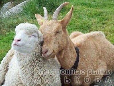 БМВД «Шени шипы» 10% овцы, козы