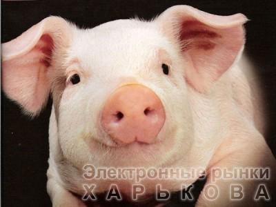 БВМД «ШенПиг Старт ST ЮА» 25% (для поросят от 8 до 35 кг)