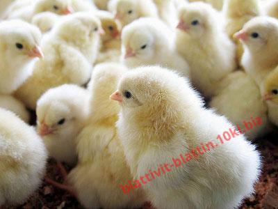 Фото КОМБИКОРМА Комбикорм старт молодняк яичных кур 0-8 недель