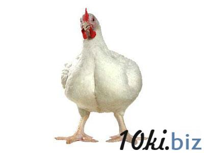 Премикс «ШенМикс Бро Старт» 0.5% бройлер старт