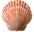 логотип Гостевой дом АКВАМАРИН
