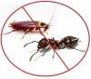 Средства от муравьев и тараканов