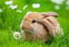 Кролівництво (Дрібні тварини)