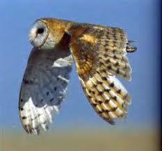 Хищные птицы: птенцы сокола Сапсан,  Чеглок , Пустельга – полностью ручные.