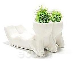 Фото Живая керамика Горшок с семенами Друзья