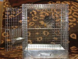 Фото Клетки для шиншилл Клетка для шиншилл маленькая