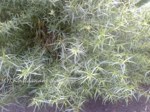 Фото Кроме саженцев  Веники дубовые для бани сауны, крепкие, большие, со вставкой трав.