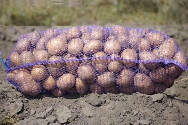Картофель Житомир бесплатная доставка Картопля Житомир