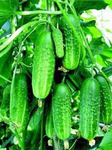 Фото ТОВАРЫ ДЛЯ ДАЧИ Удобрение органическое для комплексной  подкормки растений
