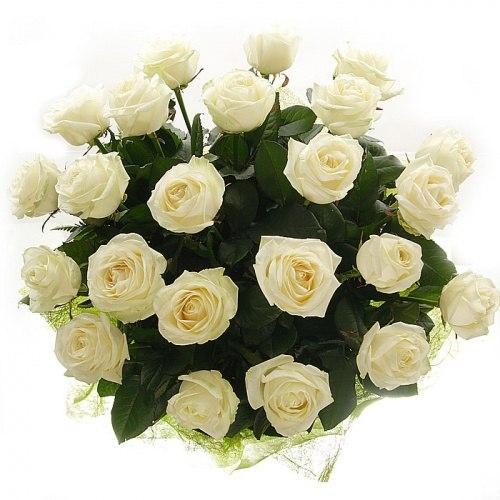 25 роз (Вендела)