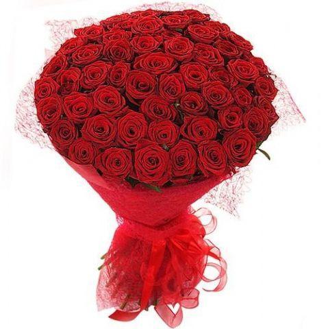 51 роза ( Фридом)