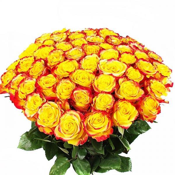 25 Роз «Хай энд Флейм»