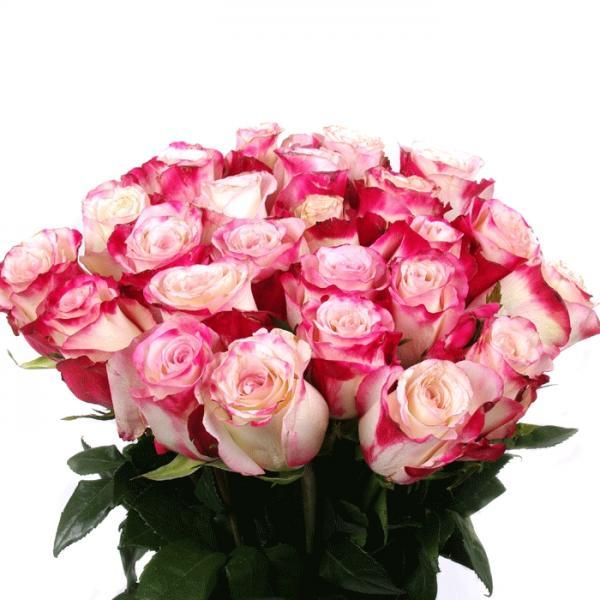 """Букет """"25 роз"""" (Свитнесс)"""