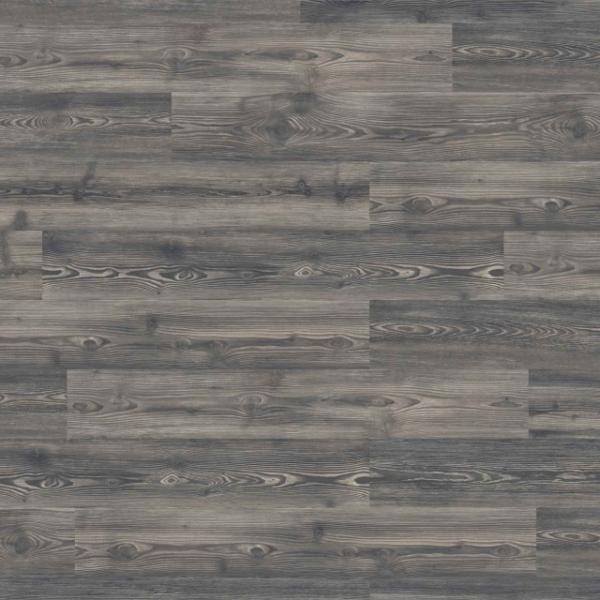 4203396 Contrasting Pine