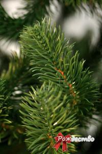 Фото Литые елки и сосны, Елка литая Люкс Елка Литая Люкс 180