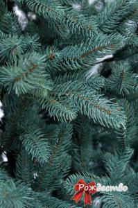 Фото Литые елки и сосны, Елка литая Голубая Елка Литая Голубая 150