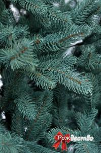 Фото Литые елки и сосны, Елка литая Голубая Елка Литая Голубая 280