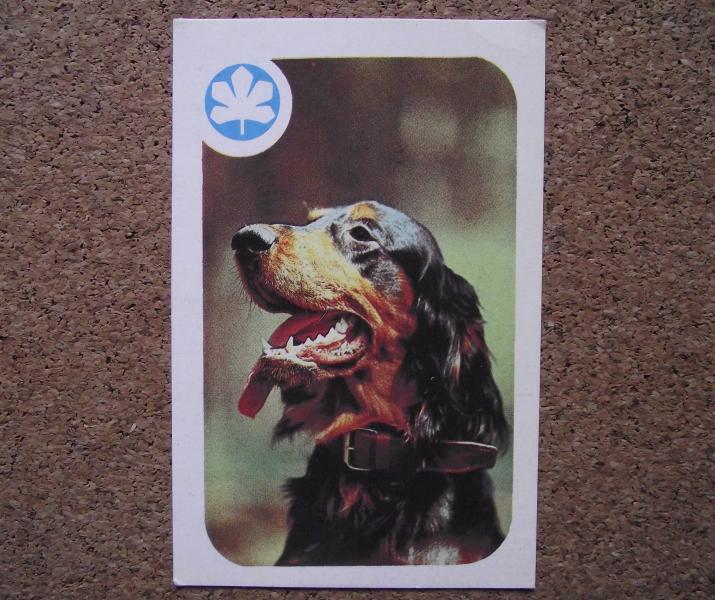 Календарик 1987 год.   Набор «НАШИ ДРУЗЬЯ»,  Шотландский сеттер