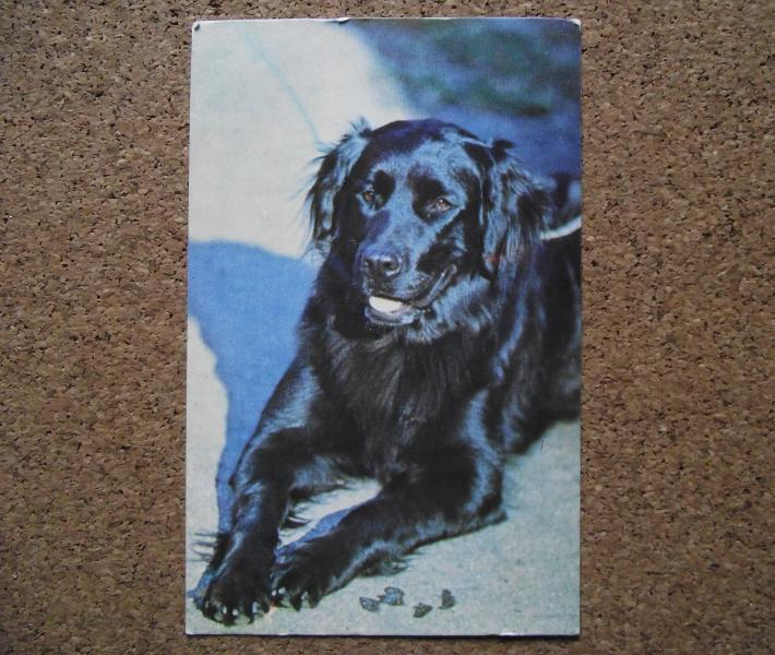 Календарик 1990 год.   Ретривер