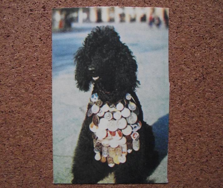Календарик 1990 год.   Пудель черный