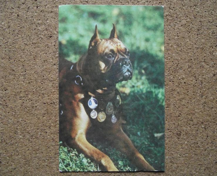 Календарик 1990 год.   Боксер