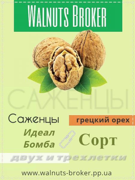 Саженцы грецкого ореха Одесса 0957351986 Walnuts Broker