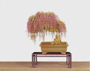 Фото Экзотические растения Золотая глициния 10шт.семена