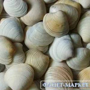 Фото Натуральные материалы - Эко Ракушки морские для декора РМ-001
