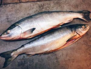 Фото Свежемороженая рыба Кета ПБГ штучная