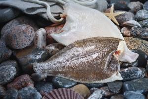 Фото Свежемороженая рыба Камбала потрошеная мороженая