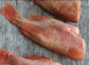 Фото Свежемороженая рыба Окунь потрошенный б/г с/м