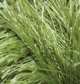 Decofur 1369 зеленый