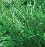 Decofur 595 зеленый