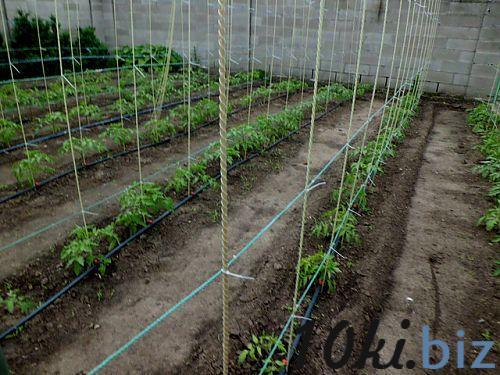 Композитный колья для помидор (опора для саженцев) Ф9мм L-110мм (7шт) Рассада и саженцы цветов в России