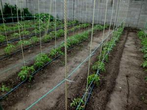 Фото Колышки для помидор (опоры для саженцев) Композитный колья для помидор (опора для саженцев) Ф9мм L-110мм (7шт)